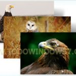 Descarga el tema oficial  aves rapaces para Windows 7