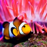 Descarga el fondo de escritorio de peces de coral para Windows 7