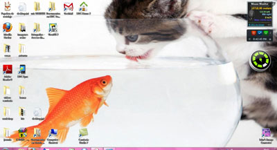 gatitos tema windows 7